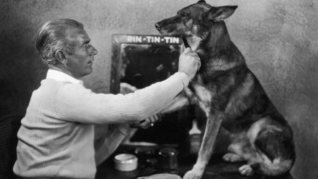 rin tin tin dog wwi