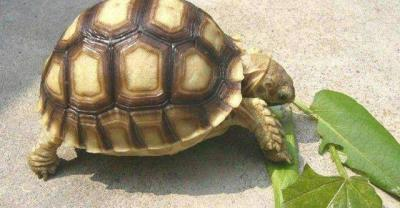 養陸龜的小白別錯過,新人指導和疾病防治大全! - 愛經驗