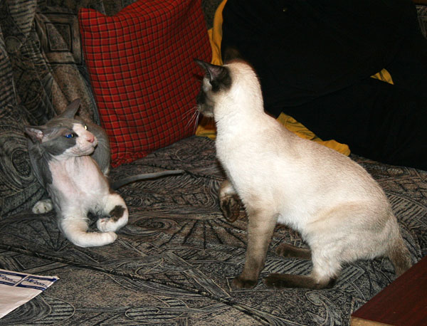 Линукс и Чиффа