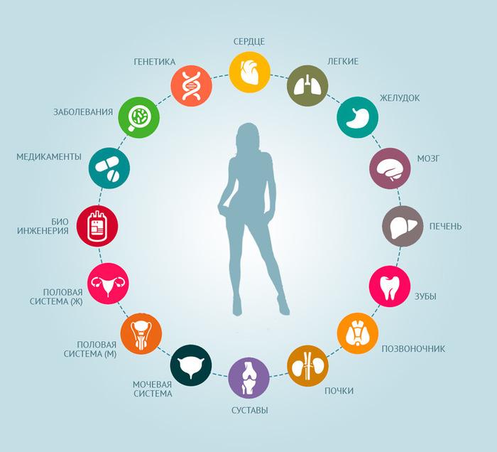 принципы здорового питания человека