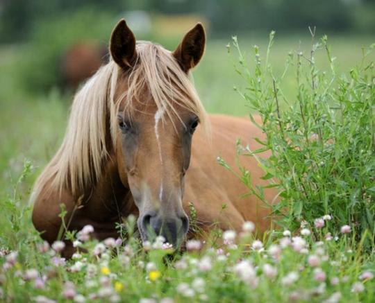 Чудные фотографии лошадок