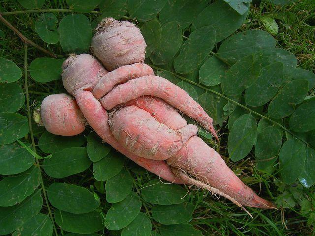 Как выбрать и сохранить морковь