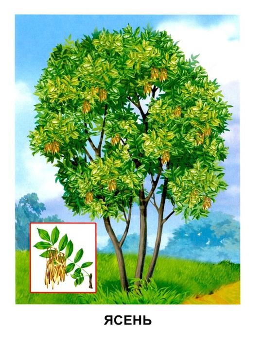 Картинки старшая группа деревья