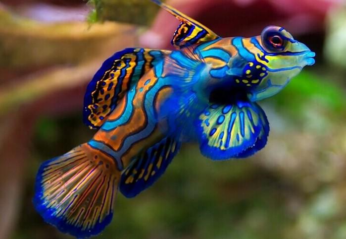 Самые красивые рыбы в мире