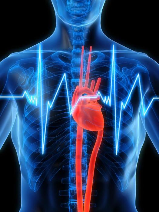 Интересные факты про наше сердце