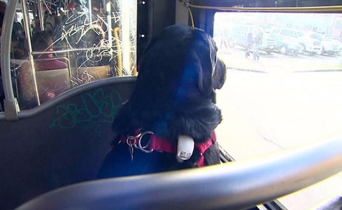 Собака пассажир в Сиэтле