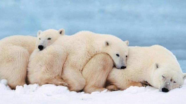 Какие животные впадают в зимнюю спячку? Причина зимней спячки животных