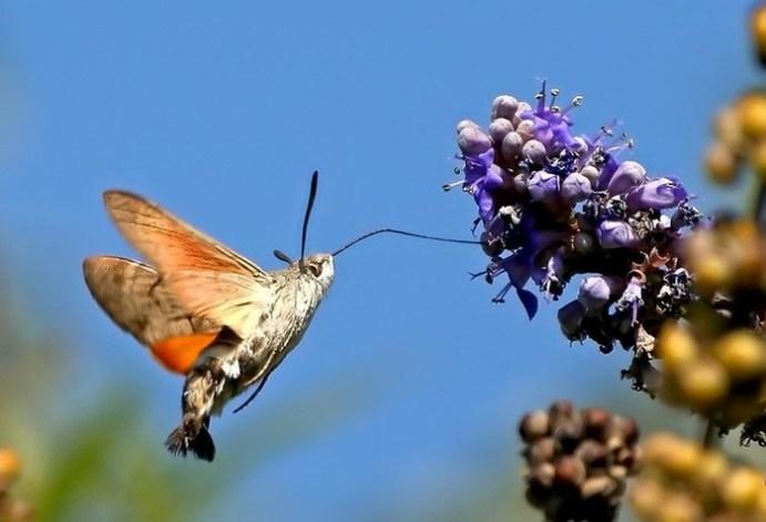 Топ 10 интересных фактов о колибри
