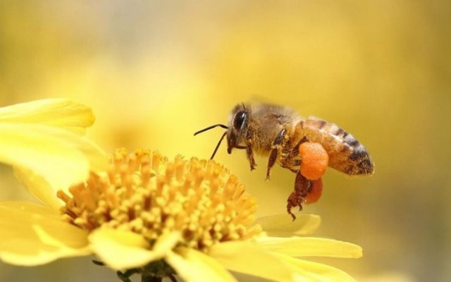 Как пчелы делают мед?
