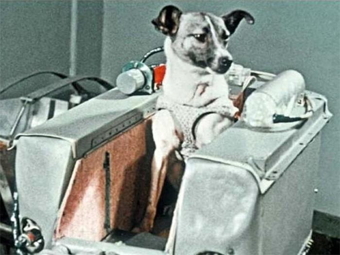 Что стало с Лайкой— первой собакой в космосе