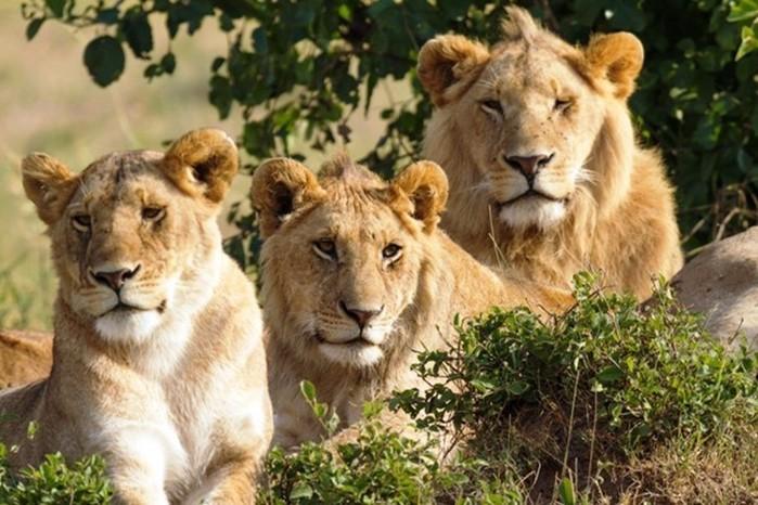 10 примеров героического спасения животными человека