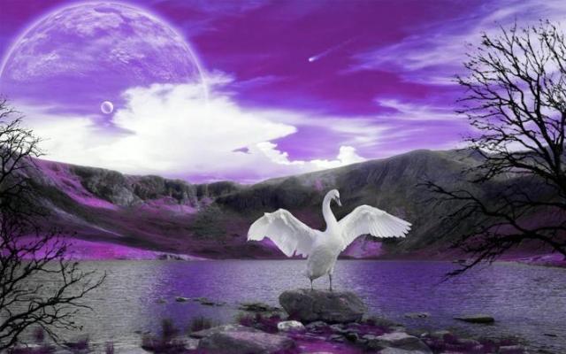 Лебединая песня: поют ли лебеди перед смертью на самом деле?