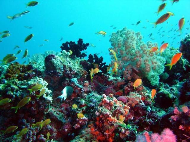 Что такое океанография?