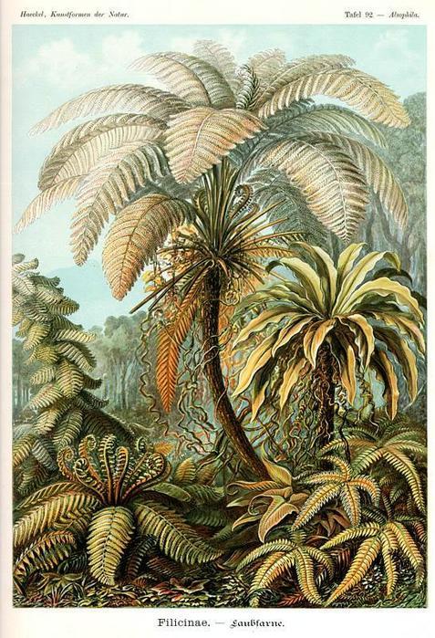 Откуда появились растения? Было время на Земле вообще без растений