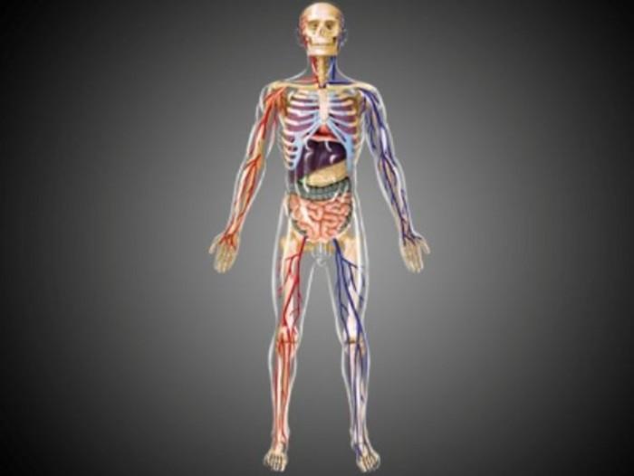 Сумасшедшие факты о вашем теле