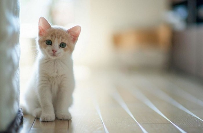 Кошки: подборка фактов и заблуждений