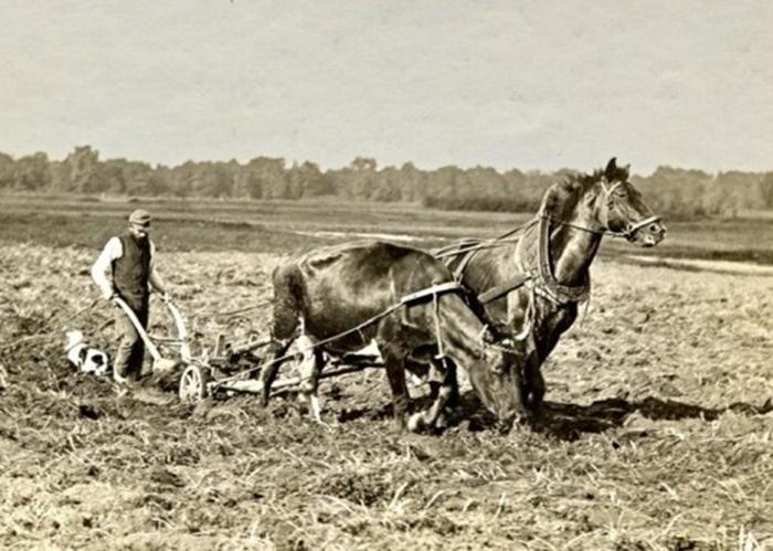 Почему на Руси не едят конину