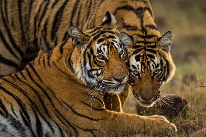 Преступное истребление дикой природы