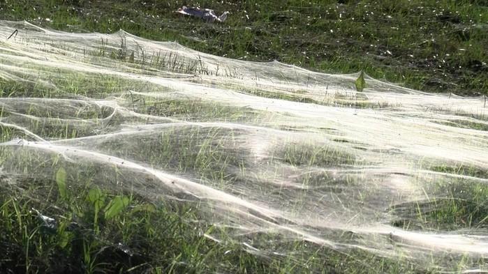 Самые массовые нашествия насекомых за последние десять лет