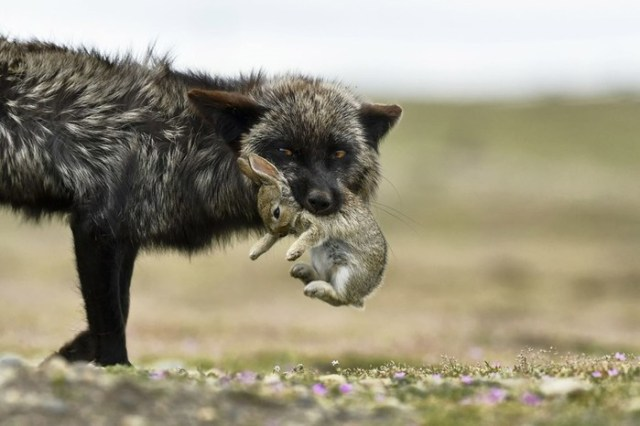 Лучшие кадры с конкурса от National Geographic