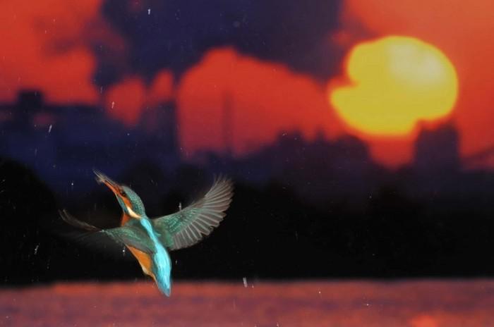 Рыба Саблезуб! Живая природа на фотографиях, сделанных за последнюю неделю