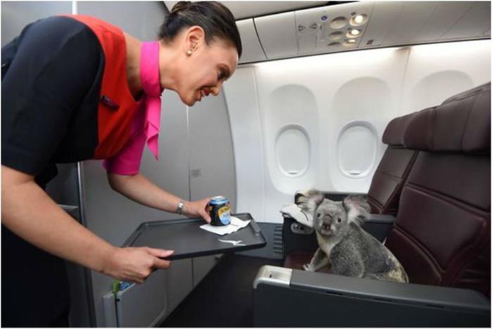 Самые необычные соседи в самолетах, которые могут составить вам компанию