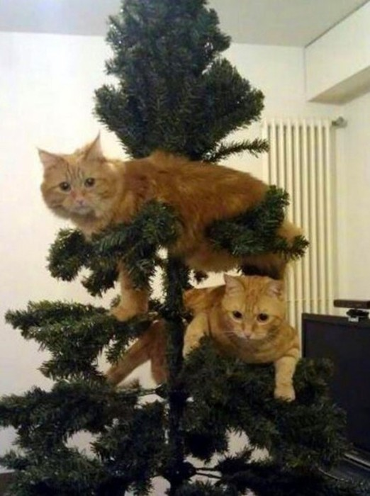 Удивительные факты о рождественских елках, которые вы должны знать