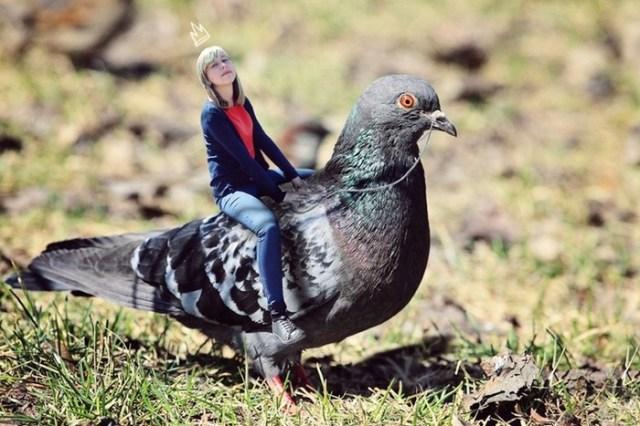 Голубиная почта популярна более чем в 60 странах! Удивительно, но голубей до сих пор используют