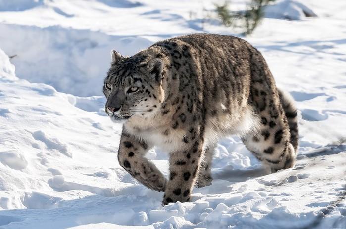 Животные, которые исчезнут в следующем году навсегда