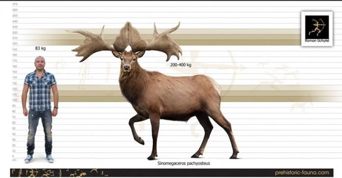 Мегафауна Земли: самые крупные животные планеты— современные и древние