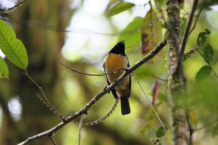 Немного интересного о птицах