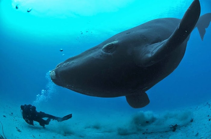 Самые большие животные обычных пород