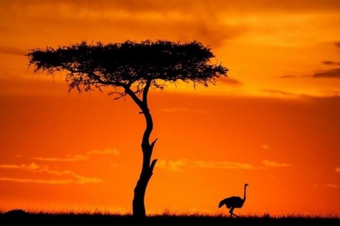 Рекорды фауны: самые быстрокрылые животные