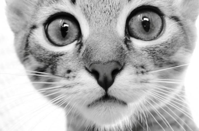 Каким видят мир кошки и другие домашние животные