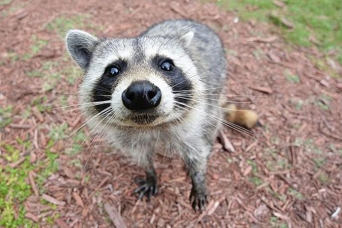 Безобидные на вид животные, которые оказываются очень опасными для человека