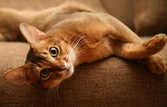 Как вывести запах мочи в квартире: чем его убрать дома