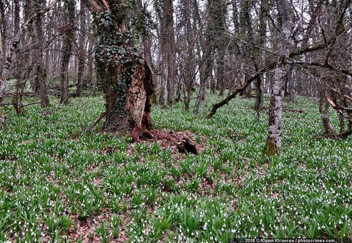 Зачем ехать в Крым в марте, или Весенние цветы
