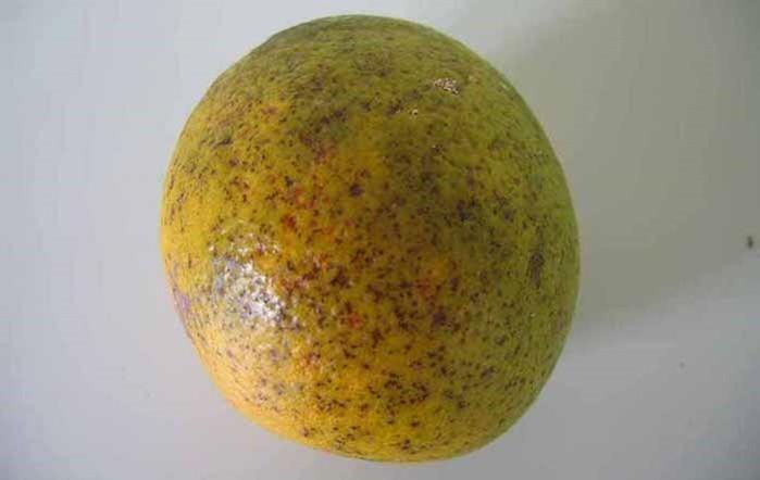 5 секретов выбора правильных лимонов