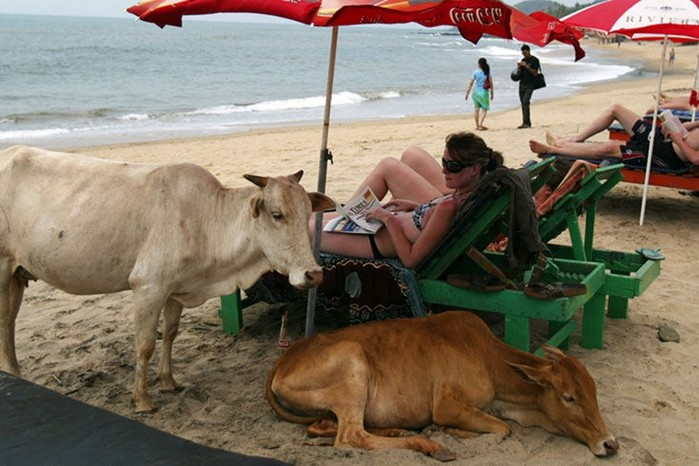 Веселый пляжный отдых: приколы на пляже (смешные фото)