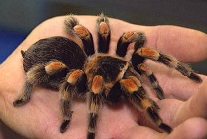 Жуткие истории о пауках: кто это у нас такой восьмилапый ползет?