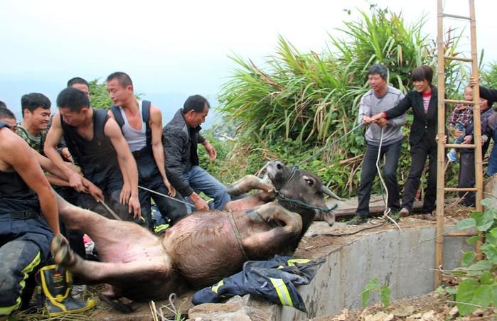 Люди и животные, которые застряли в самых неожиданных местах