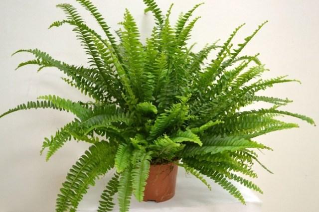 Не держи эти растения в квартире, чтобы не навлечь беду