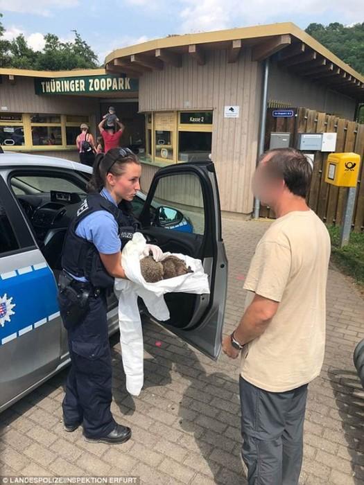 Как в Германии ежей спасают от похмелья