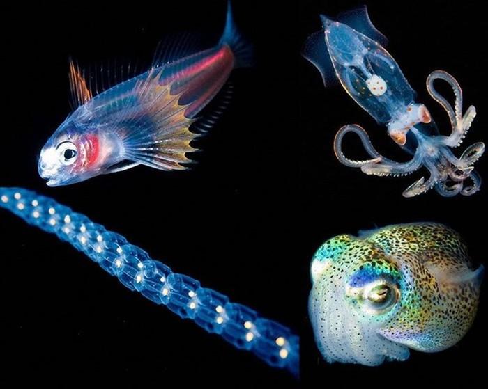 Светящиеся существа из морских глубин: 10 фотографий