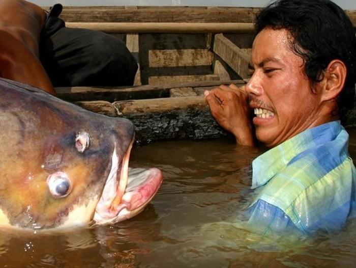 Гигантские рыбы, которых можно встретить в морских глубинах