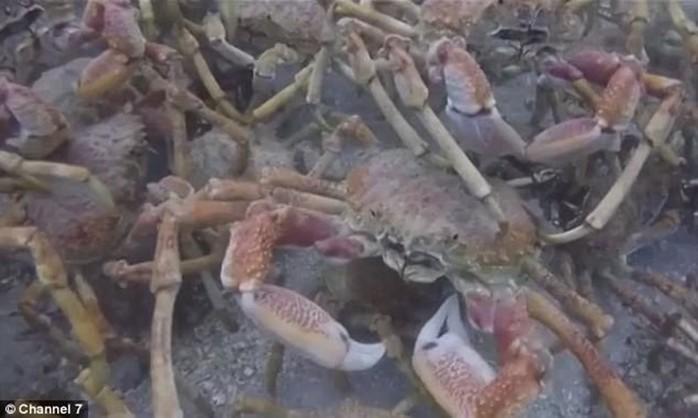 Невероятные обитатели океана, обнаруженные на глубине 4 км