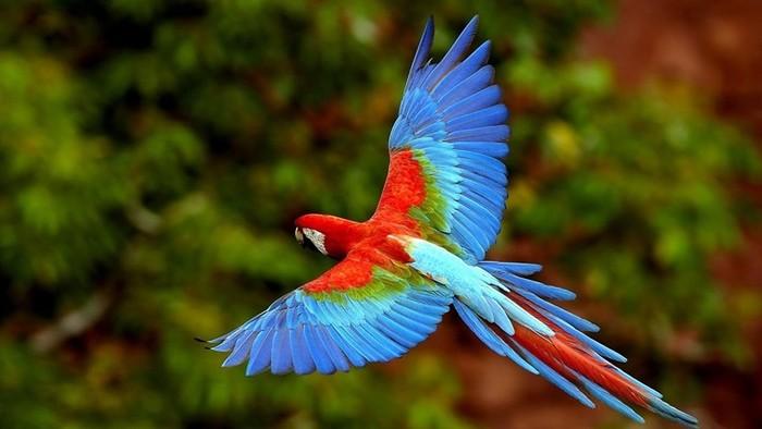 Есть ли у птиц уши? Как у них устроены слух, зрение, нюх и другие органы чувств