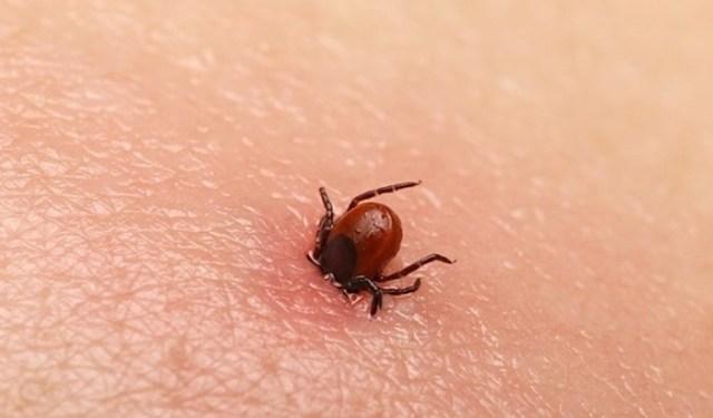Топ 6 распространённых укусов насекомых: как определить, кто вас укусил