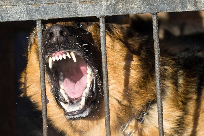 Как не стать жертвой бешеного животного и не умереть от укуса