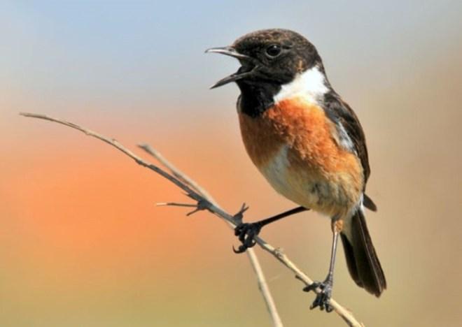 Фотограф Хоаким Оливейра показывает «других птиц»